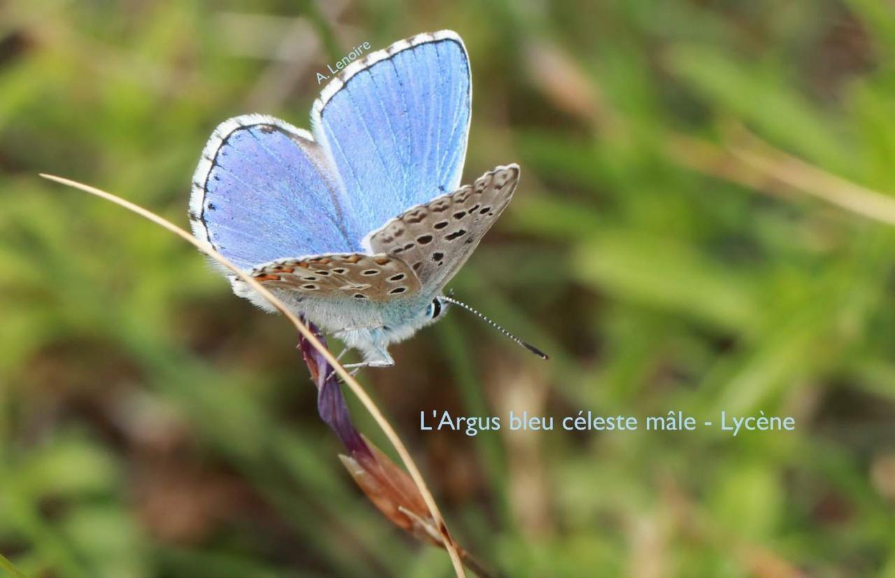 Les papillons d'Agnès Lenoire
