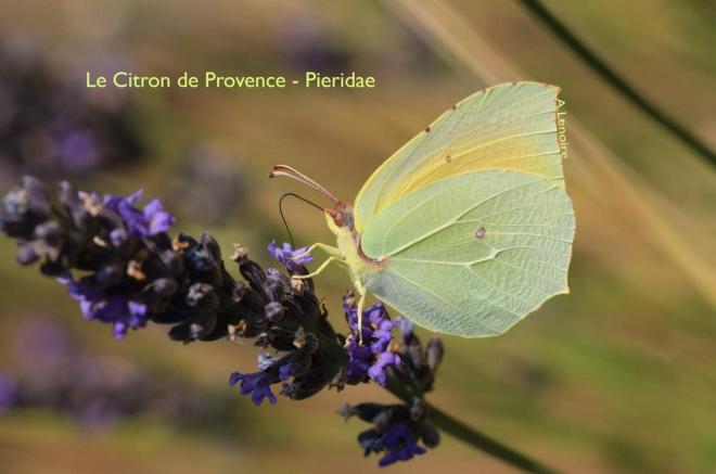 Citron de Provence-1500