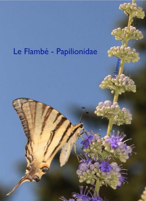 Flambe-1500