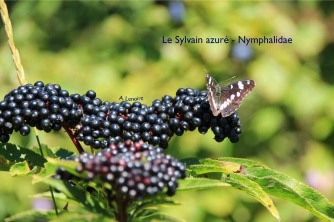 Sylvain azure-1500
